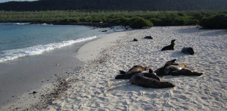 Galapagos eng