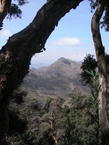 Polyepsis-Wald